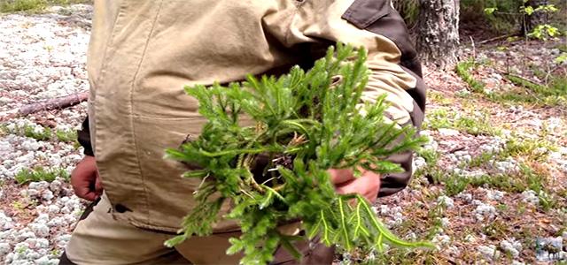 Мочалка своими руками из лесной травы