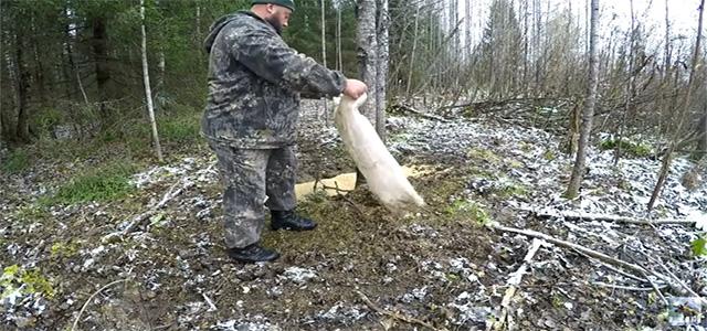 Солонец для лося и кабана