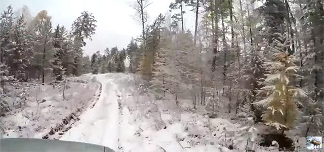 Красивый лес. Поздняя осень