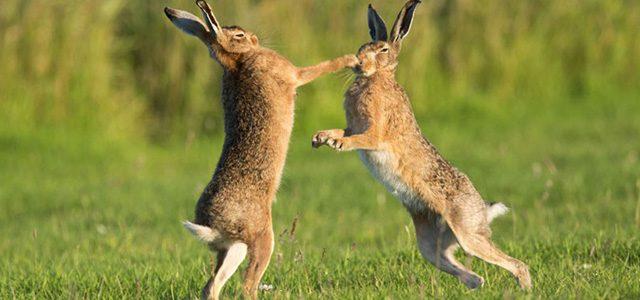 Охота на зайца: масса способов для успешной добычи