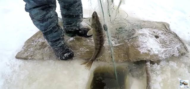 Браконьеры ловят рыбу зимой